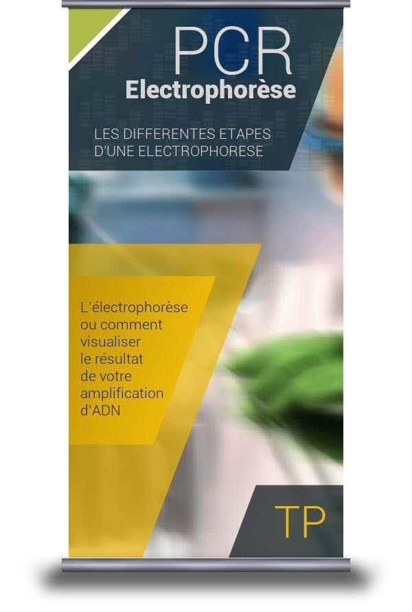 Electrophorèse