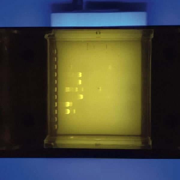 Révélation par fluorescence
